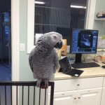 Angelbird watches over the treatment room at Oceanside Animal Hospital in Sandwich MA