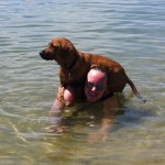 Dog and Technician Swimming at Oceanside Animal Hospital